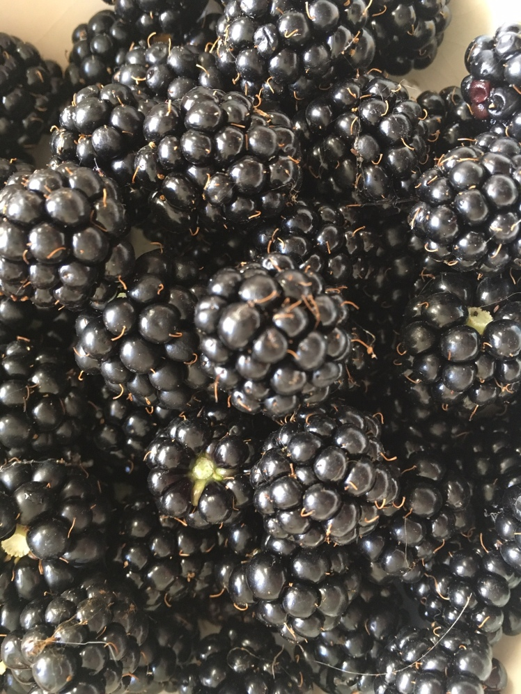 Blackberries from the garden